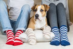 Two people and their dog in colorful socks sitting on the bed in the bedroom. stock photo