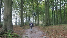 Two people walking along through the beech forest of Rugen island. Sassnitz, Mecklenburg-Vorpommern/ GERMANY October 19 2016: Two people walking along through stock video