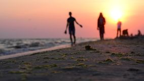 Two people walking with a dog on the coast at sunset. People on the beach with a dog. Walk on the evening coast with a dog. A man and a woman are walking with a stock footage