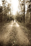 Two people walking in forest. Monochrome photo of two people walking in a dirt path in a forest Stock Photography