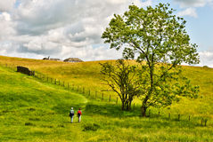 Two people walking through a golden meadow. Two people walking through a golden meadow near Far Sawrey, Cumbria,  in the English Lake District National Park Stock Images