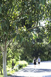 Two people walking in the outdoors, Sydney, Australia Royalty Free Stock Photo