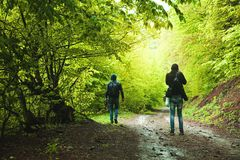 Two people walking in the spring forest stock image