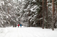 Two people walking in the winter forest Stock Image