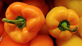 Two Peppers Showing Off Their Beautiful Green Stems Are Cradled Among Other Colorful Peppers. Selective Focus