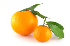 Two perfectly fresh oranges. Isolated on white Royalty Free Stock Images