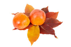 Two persimmons and autumn leaves. Stock Photos