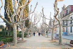 Two person walking between unique looking dry trees in the Ciutadella Park or Parc de la Ciutadella in Barcelona, Spain, Europe. Barcelona, Spain - February 8 royalty free stock photo