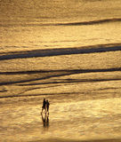Two persons walking on the beach. Under a golden sunset stock photos