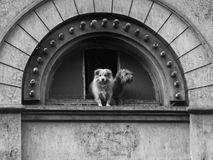 Two pet dogs abandoned by their owners Stock Photos