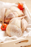 Two pheasants bird, plucked and stuffed Stock Photography