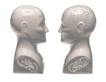 Two Phrenology heads facing each other on white background Stock Photo