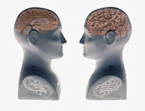 Two Phrenology heads showing human brain facing each other on white background. Two Phrenology heads showing human brain facing each other isolated on white Royalty Free Stock Photo
