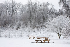 Two Picnic Benches in Snow. Two park benches covered in snow at park with trees Royalty Free Stock Images