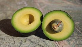 Two pieces of avocado. Avocado cut into two parts. On the rain forest stone table background royalty free stock photography