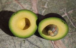 Two pieces of avocado. Avocado cut into two parts. On the rain forest stone table background stock photo