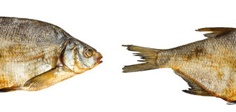 Two pieces of dry fish Stock Photography