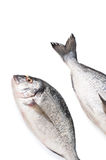 Two pieces of fresh Dorado fish on a white background. Isolated. Stock Photography