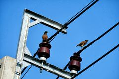 Two pigeon birds stand on electric cable wires with cleary blue sky, horizontal shot. Two pigeon birds stand on electric cable wires before the cleary blue sky Royalty Free Stock Photos