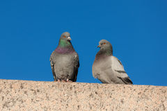Two pigeons Royalty Free Stock Photography