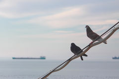 Two pigeons against the background of black sea Stock Images