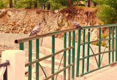 Two pigeons in Conversation!!!. This photograph is captured at a bridge in Gangotri, Uttarakhand, India. Two pigeons are sitting over the railing, as if in a Stock Photography