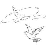 Two pigeons in flight. Outline Stock Images