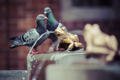 Two pigeons and Fountain with golden lucky frog - the symbol of Royalty Free Stock Image