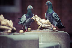 Two pigeons and Fountain with golden lucky frog - the symbol of Stock Image