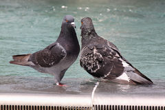 Two pigeons in fountain Royalty Free Stock Photos