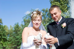 Two pigeons and newly-married couple Royalty Free Stock Photo