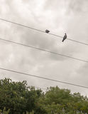 Two pigeons outside on top of a train electrical line Stock Photo