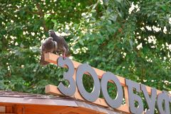Two pigeons on the sign stock images