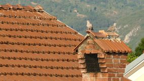 Two pigeons standing on the chimney - one flies away. Two grey Rock Pigeons or rock doves, standing on the chimney at a rooftop of the house. One pigeon flies stock video