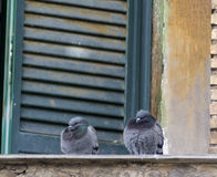 Two pigeons Royalty Free Stock Photos