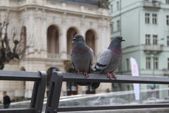 Two pigeons standing on railing in Karlovy Vary Stock Photo