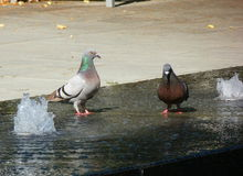 Two pigeons standing on a water fountain Stock Photo