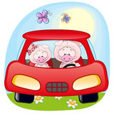 Two Pigs in a car Stock Photos