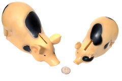 Two pigs have found a coin. On white background Stock Images