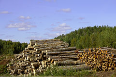 Two piles of logs rural landscape Royalty Free Stock Image