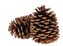 Two pine cone Royalty Free Stock Photos