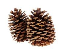 Two pine cone Stock Photo