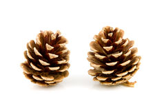 Two pine cones Royalty Free Stock Photography