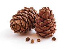 Two pine cones. Isolated  on a white background Stock Image