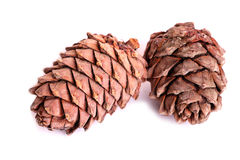 Two pine cones Stock Image