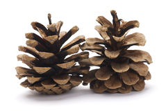 Two Pine cones Stock Images