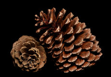 Two pine cones Royalty Free Stock Image