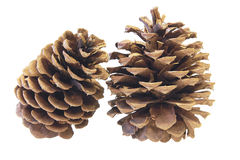 Two Pine Cones Closeup Stock Image