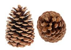Two pine cones Stock Photos