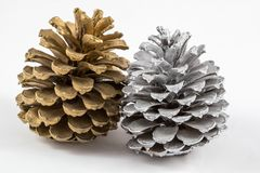 Two pine cones isolated royalty free stock images